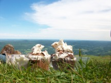 Birthday Cupcake on Greylock