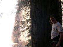 Travis big Tree